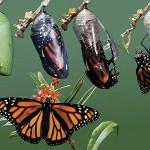 The Amazing Alchemy of Transformation